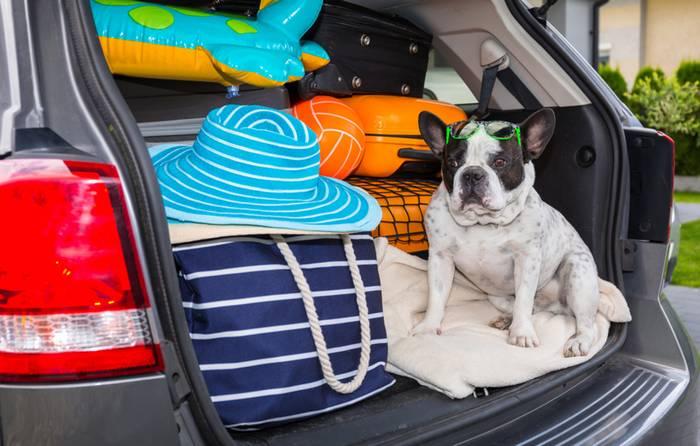 Im Auto zu verreisen ist für den Vierbeiner die angenehmste Art zu Reisen. (Foto: shutterstock - Patryk Kosmider)